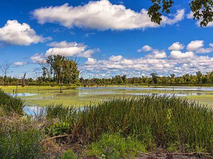 great marsh trail